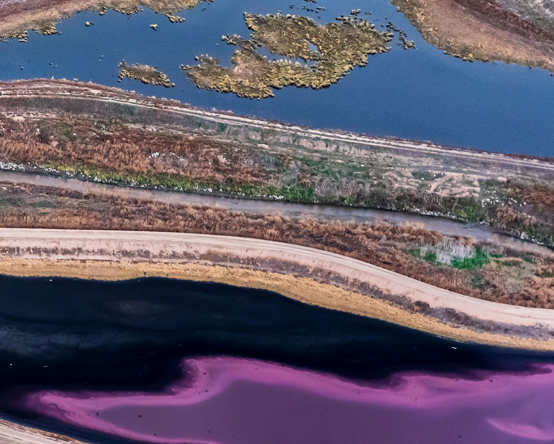 Purple Sulphur Bacteria Pond Colorado