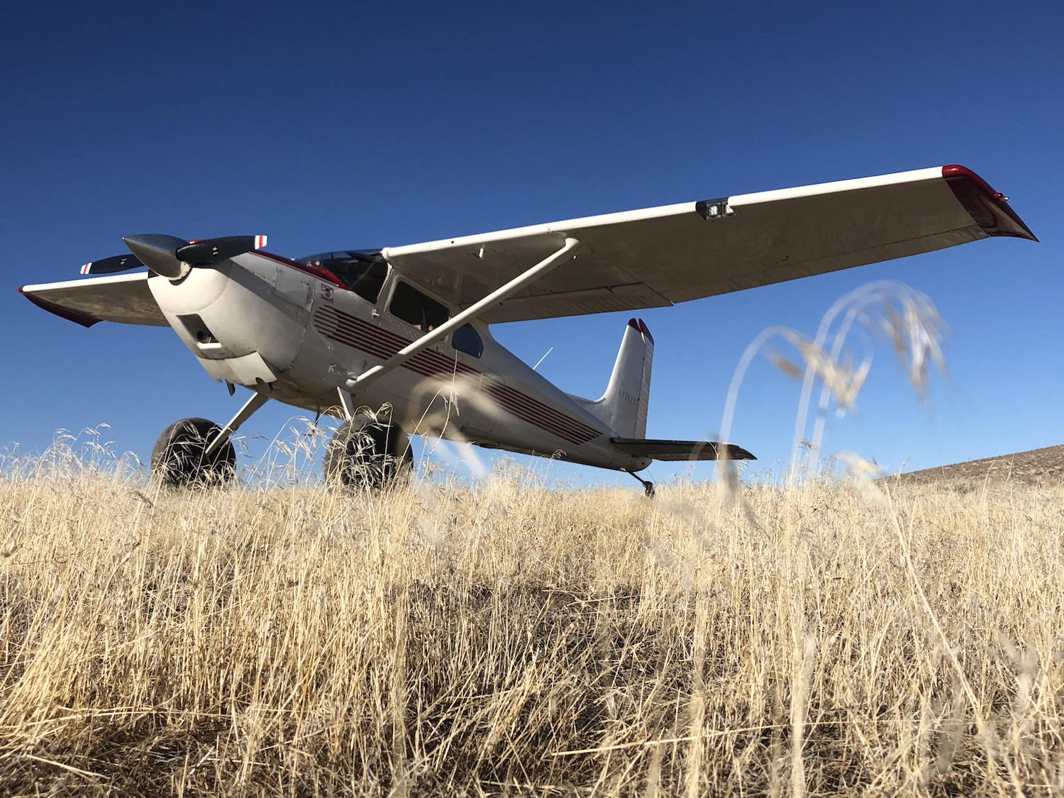 Cessna 180 by Shawn Stover